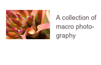 A collection of macro photo-graphy